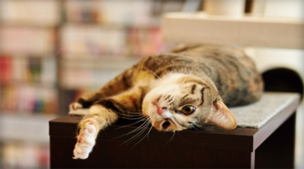 1d266-library-cat-2