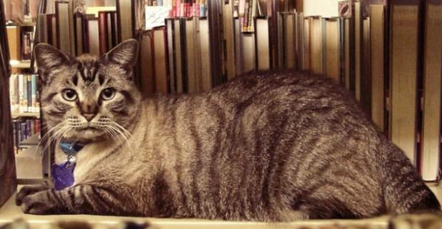 q9jez-library-cat-1